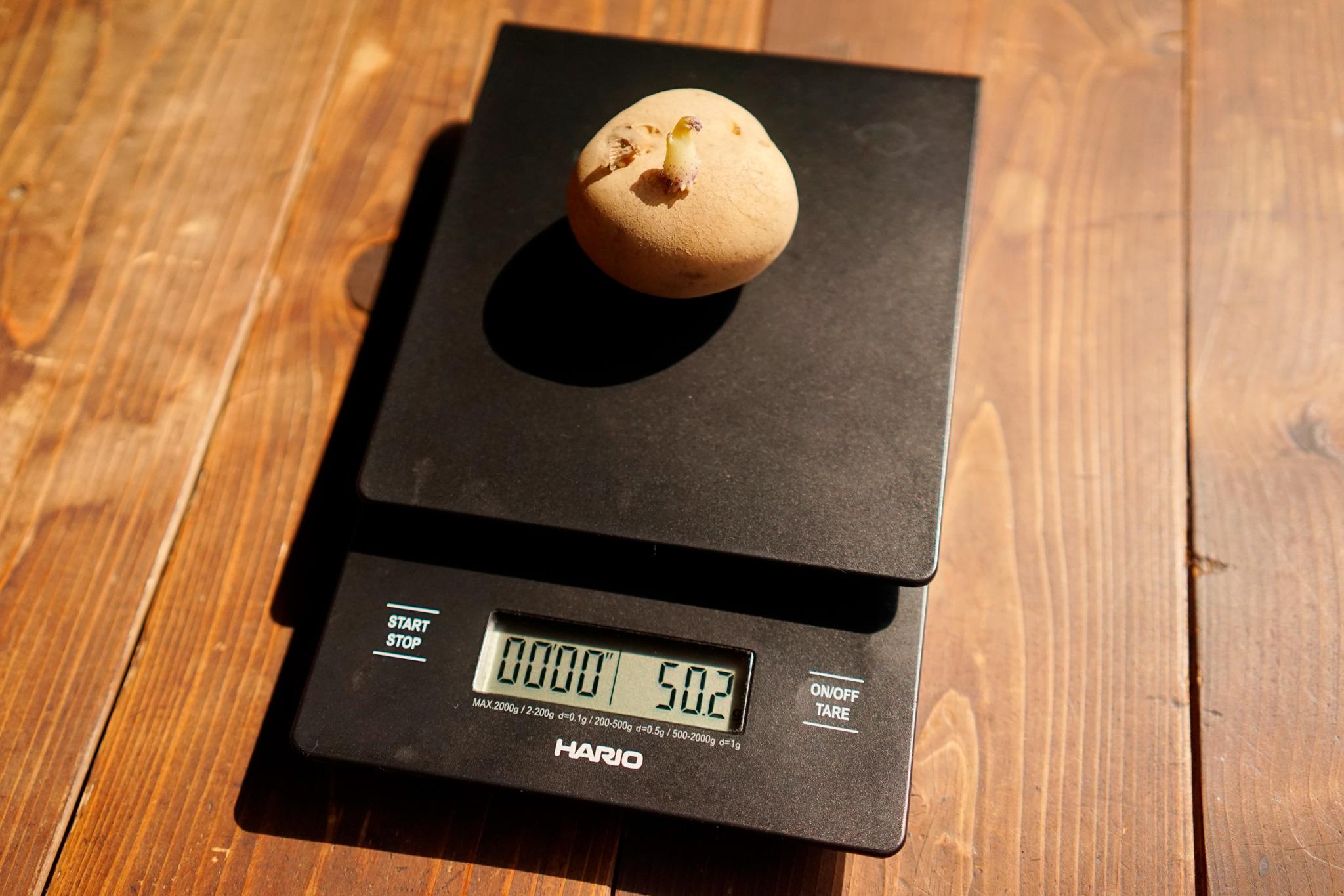 ジャガイモ タワラワイス400 栽培