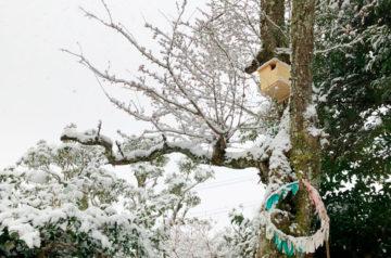 梅の花と巣箱と雪
